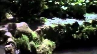 Karate Tigris 4 A Szabadság Fiai Teljes Film HUN