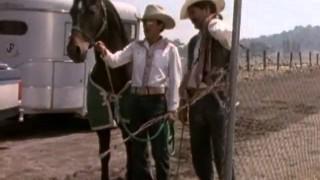 El Vaquero y La Dueña 1998 – Pelicula