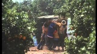 Dili-vízió – /Sweet'n Short/ – színes, magyarul beszélő, amerikai-dél-afrikai vígjáték, 86 perc, 1991