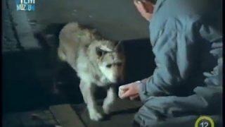 Tetthely – Utolsó kívánság – Sein letzter wille (1988)
